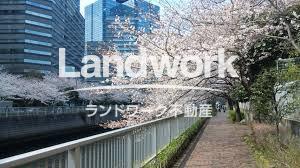 目黒川桜②